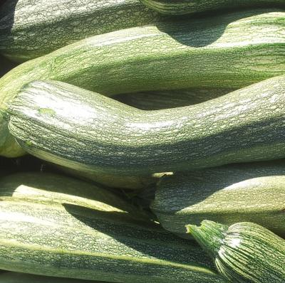 Picture of Courgette (homegrown)