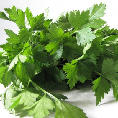 Picture of Parsley - flat leaved italian (homegrown)