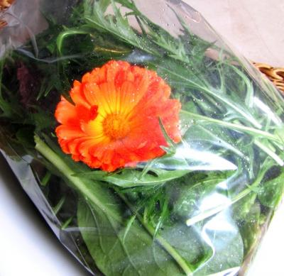 Picture of Seasonal salad bag (homegrown)