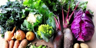 Vital Veg Vegetable boxes local and organic