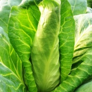 Vital Veg, organic farm, pointed cabbage
